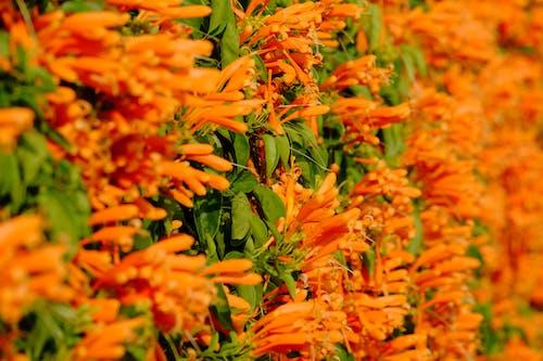Foto stok gratis bagus, bunga, bunga buatan, bunga lonceng