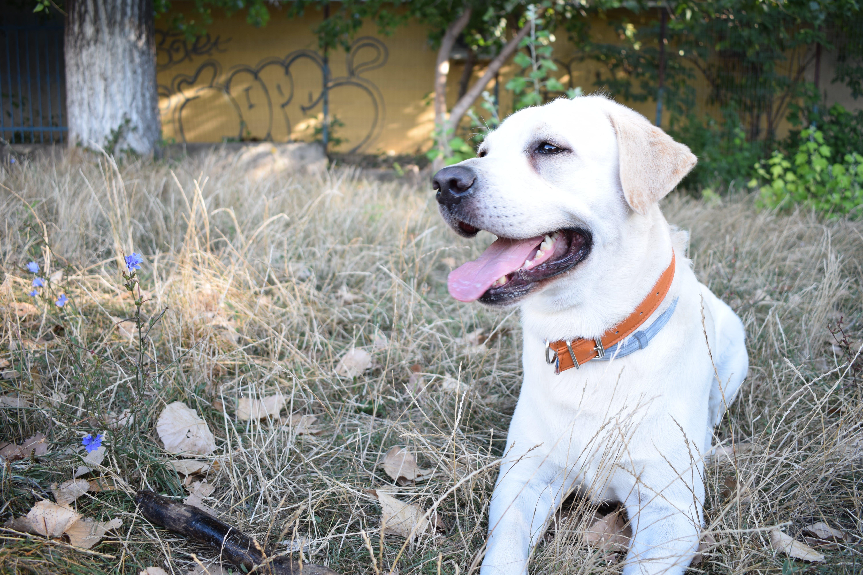 가정의, 강아지, 개, 귀여운의 무료 스톡 사진