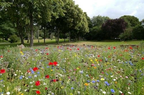 Kostnadsfri bild av äng, blommor, fält, flora