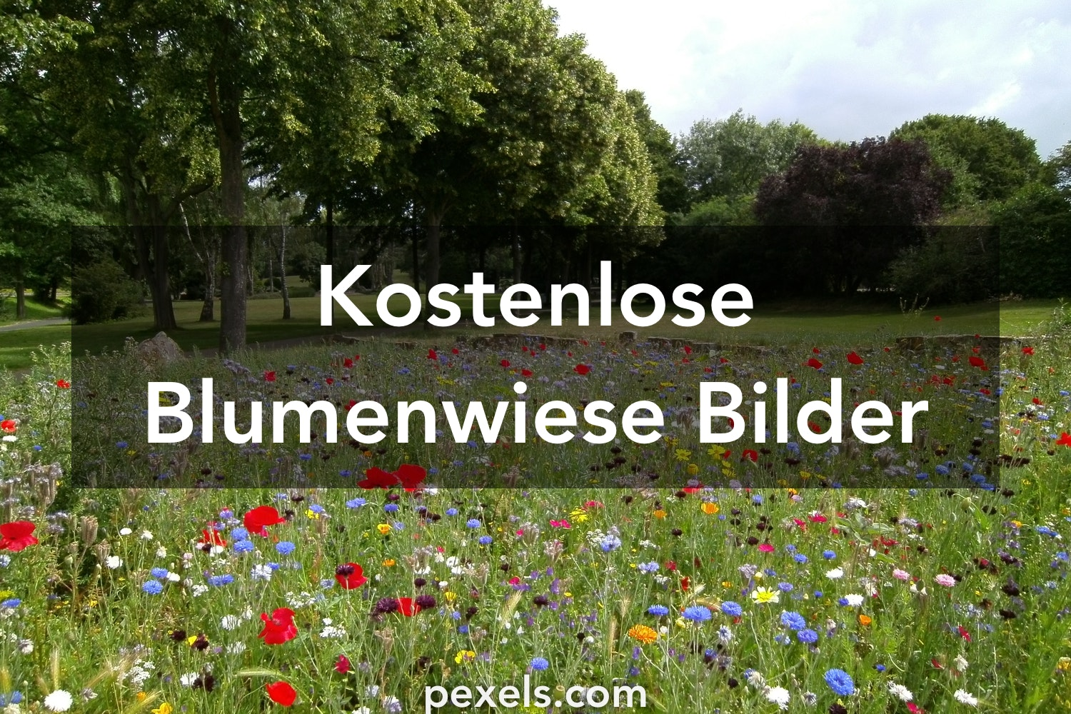 10 blumenwiese fotos pexels kostenlose stock fotos. Black Bedroom Furniture Sets. Home Design Ideas