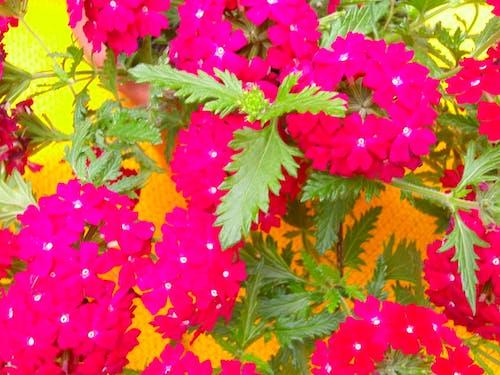 คลังภาพถ่ายฟรี ของ กระถางดอกไม้