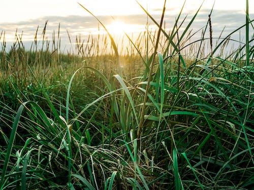 Foto d'estoc gratuïta de alba, cel, concentrar-se, creixement
