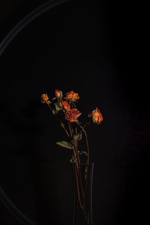 Základová fotografie zdarma na téma barva, flóra, jasný