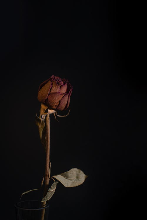 Základová fotografie zdarma na téma dřevo, flóra, jídlo