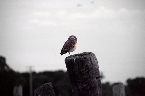 Free stock photo of animal, feathers, owl, wildlife