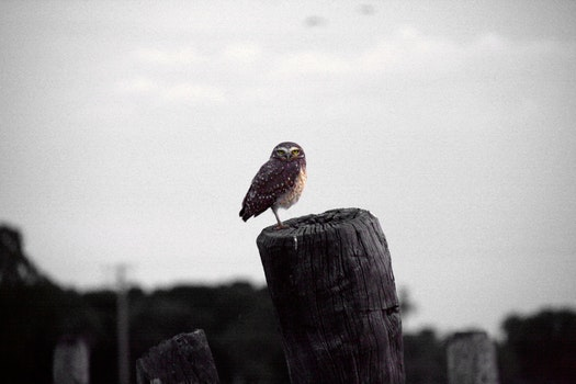 Free stock photo of wood, bird, animal, owl