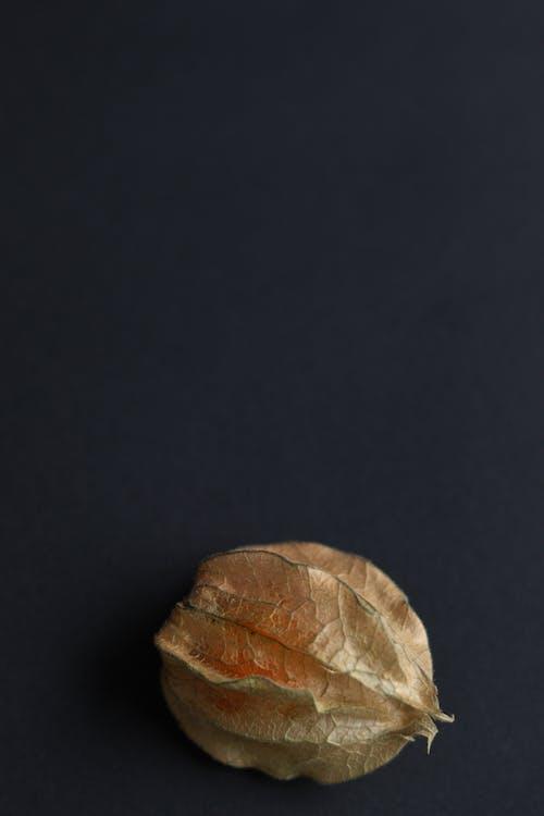 Gratis arkivbilde med cape gooseberry, frisk, frukt