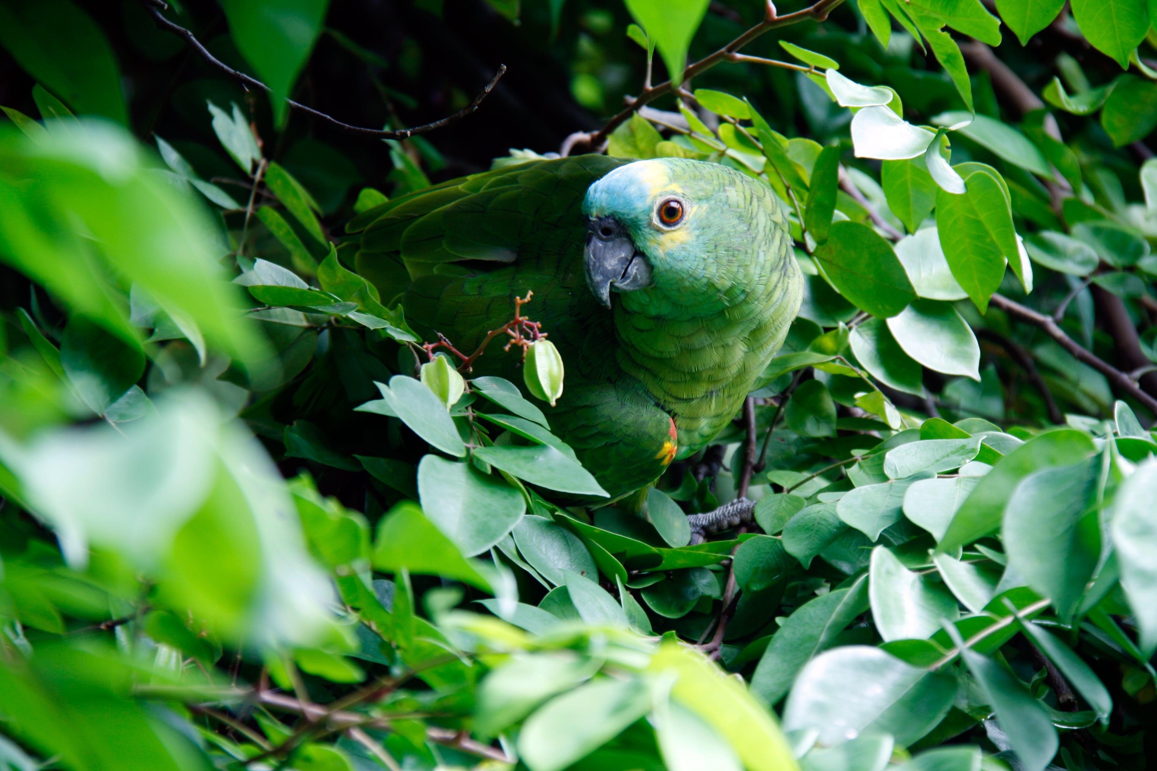 Red Parakeet on Green Leaf Plant