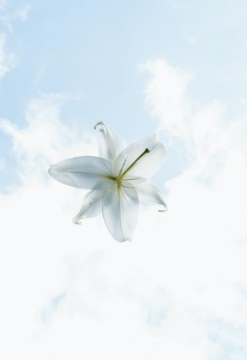 White Flower Under Blue Sky