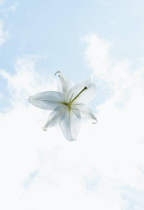 Ingyenes stockfotó ég, egyszerű, elegáns, fehér témában
