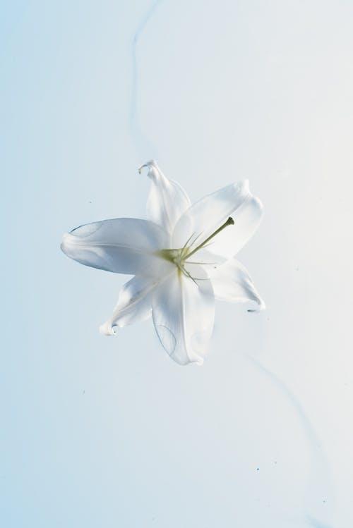 Kostnadsfri bild av bakgrund, blå, blad