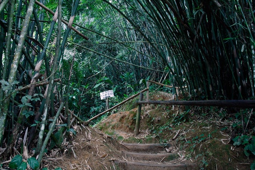 Free stock photo of bar, forest, path, bamboo