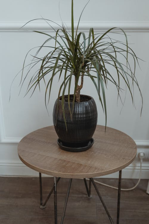 Foto d'estoc gratuïta de decoració, gerro de ceràmica, planta decorativa