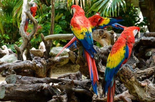 Red Yellow Blue and Green Parrot on Brown Tree Branch