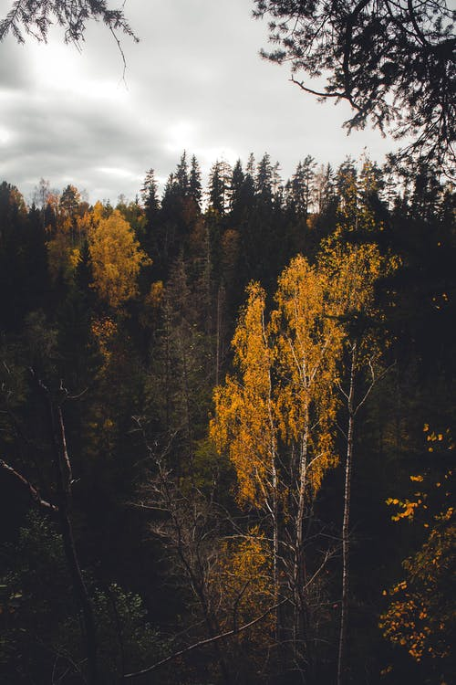 Green and Brown Trees Under Cloudy Sky