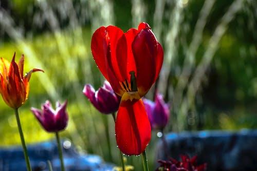 Základová fotografie zdarma na téma barevný, botanický, čerstvý, flóra