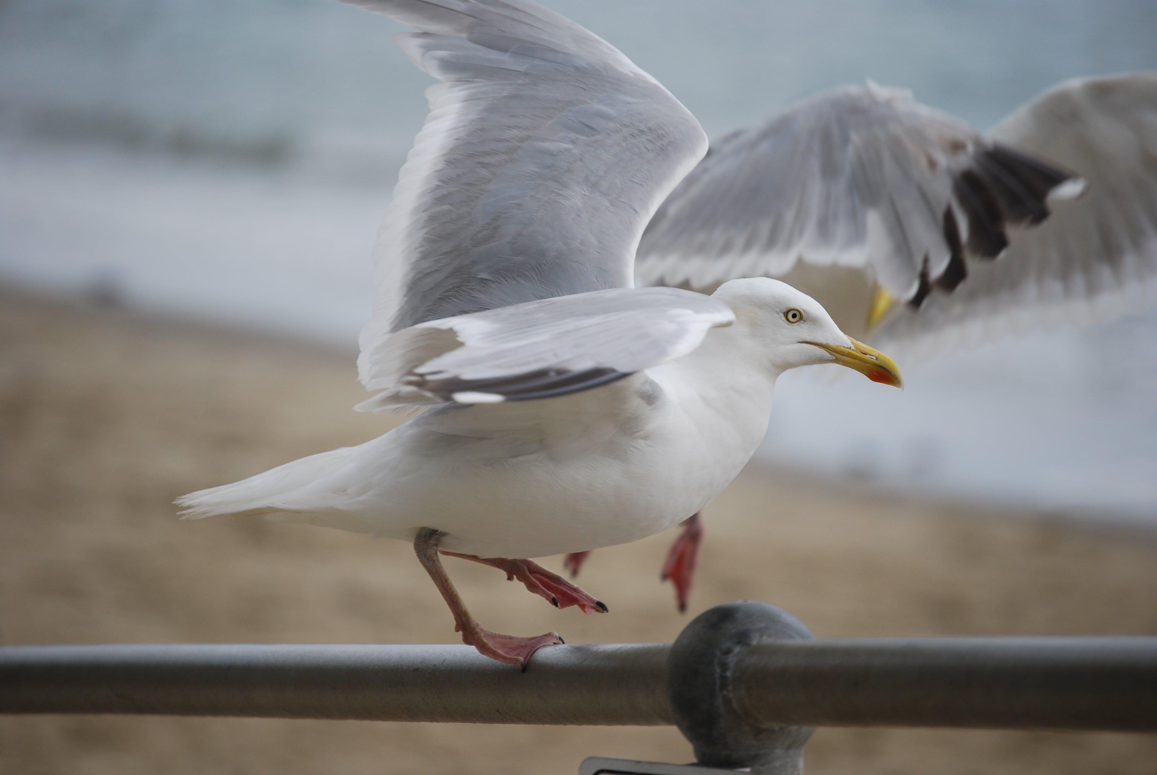 White Bird on Silver Steel Rod
