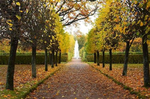 Brown Pathway Between Green Trees