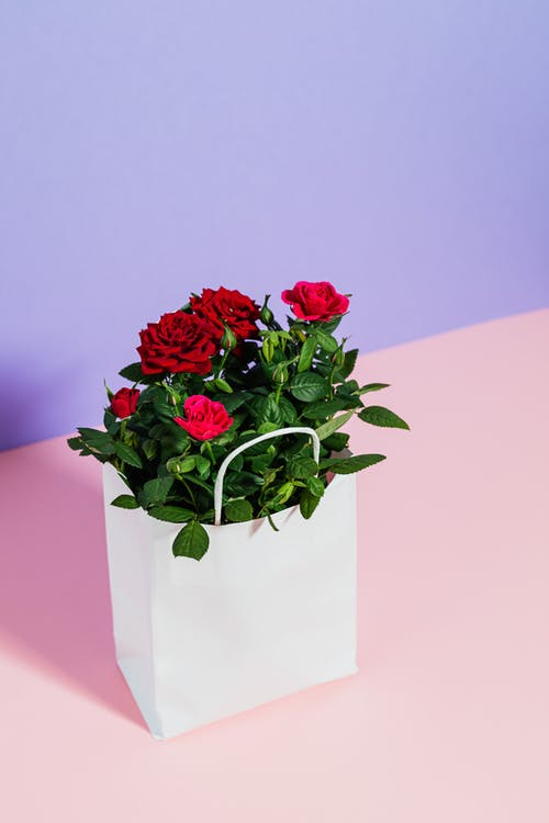 Red Roses in White Paper Bag