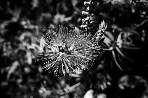 Kostnadsfri bild av blomma, bottle, svartvitt