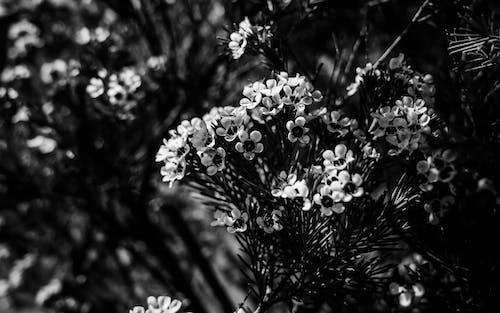 Kostnadsfri bild av blad, blomma, färg, flora