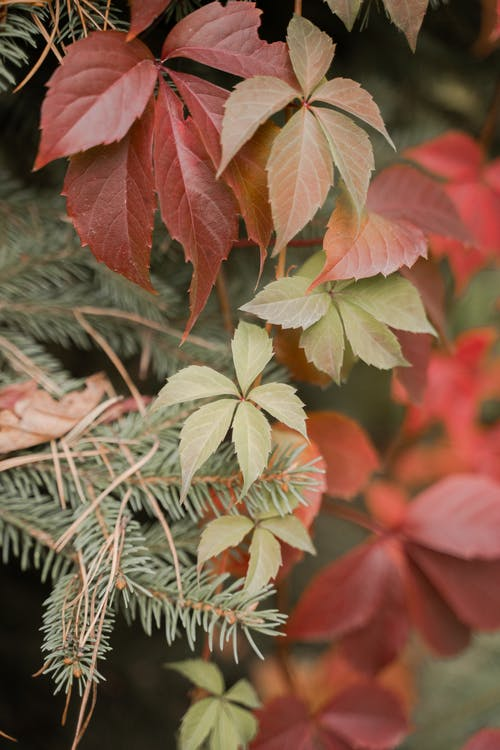 Red and Green Leaves in Close Up Photography