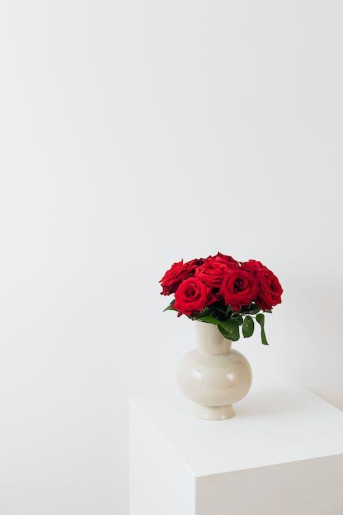 Red Rose in White Ceramic Vase