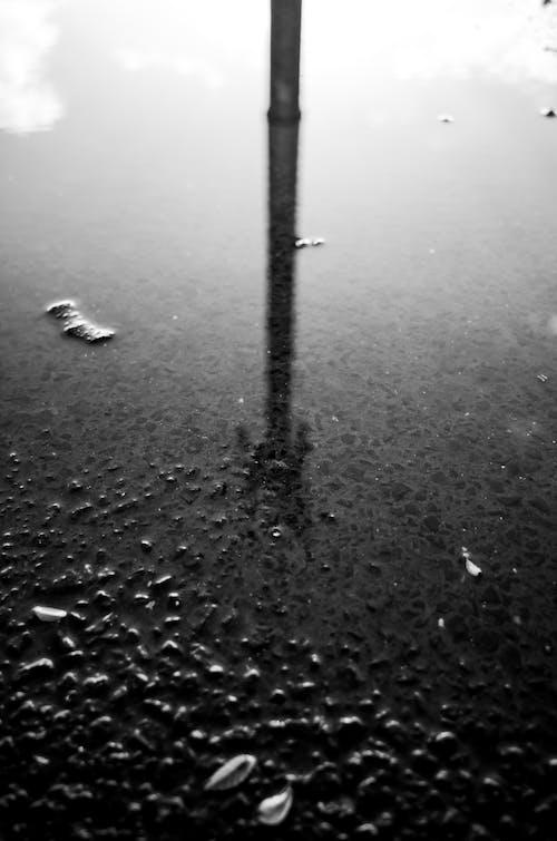 Kostnadsfri bild av reflektion, svartvitt