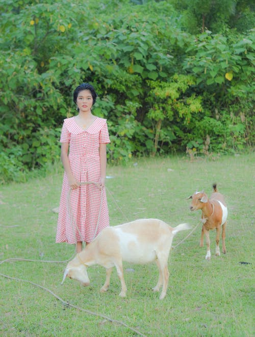 Woman in Pink and White Dress Standing Beside Brown and White Short Coated Dog
