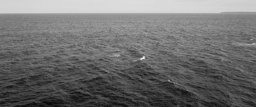 Mar Ondulante Con Olas Espumosas En Exceso