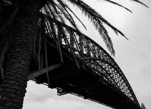 曇りの日の手のひら近くのモダンな巨大なアーチ橋