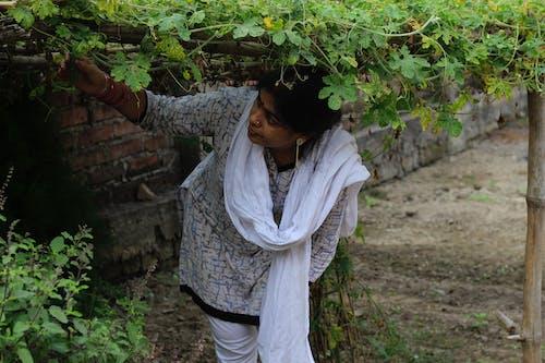 Free stock photo of indian woman, rural women, village girl