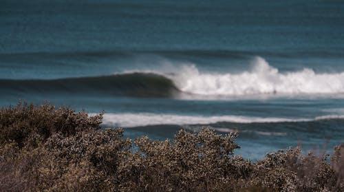 Waving sea near coast with bushes