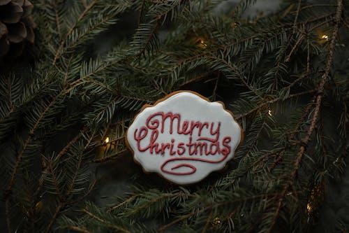 Merry Christmas inscription on gingerbread cookie between fir sprigs