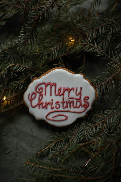 Biscuit with Merry Christmas title on spruce sprigs