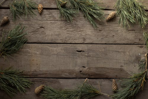 Spruce branches and cones on woody background