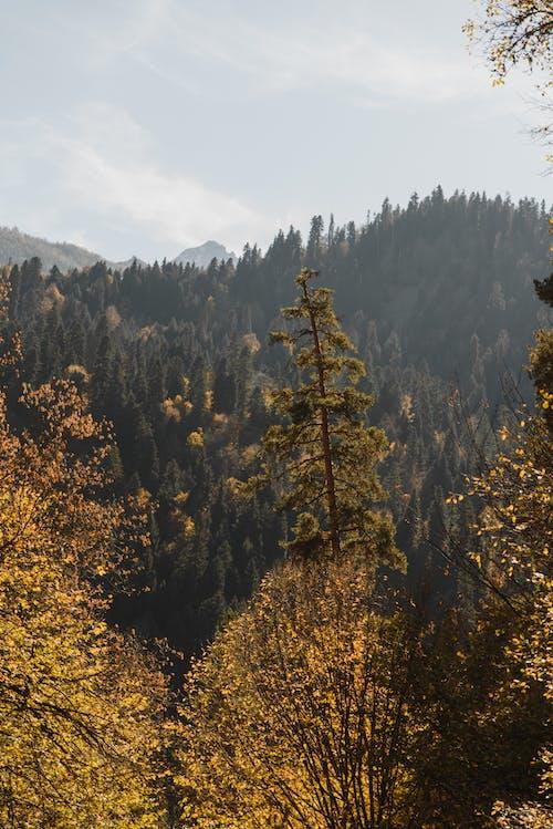 Beyaz Bulutların Altında Yeşil Ve Sarı Ağaçlar