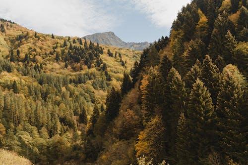 Beyaz Bulutların Altında Dağda Yeşil Ve Kahverengi Ağaçlar
