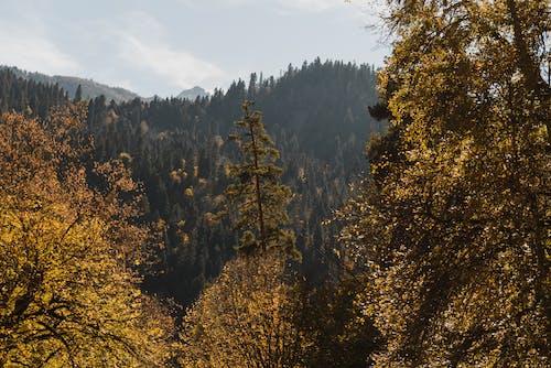 Árvores Verdes E Amarelas Sob Nuvens Brancas