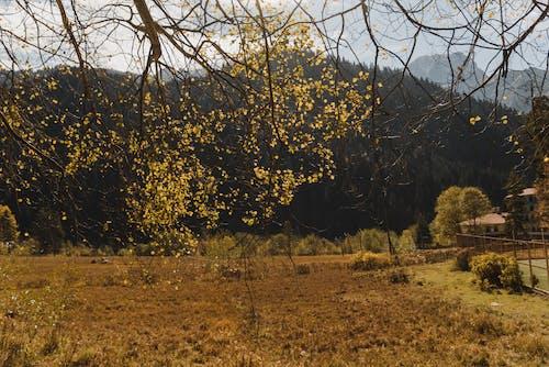 緑と黄色の葉の木