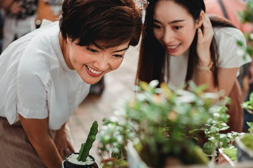 Crop cheerful Asian women looking at houseplants on market stall