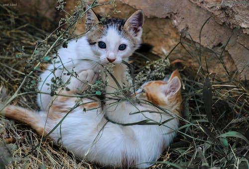 Free stock photo of cat, cat face, cat's eyes