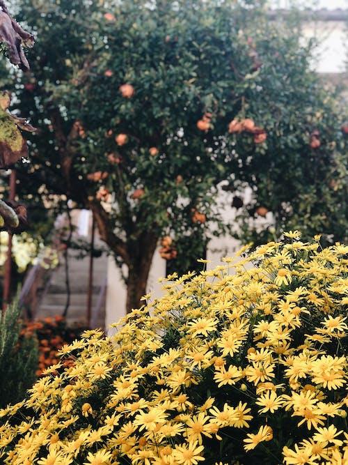 Immagine gratuita di architettura del paesaggio, fiori bellissimi, fiori da giardino