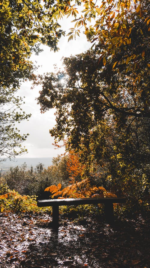 Empty bench in autumn forest growing on mountain slope