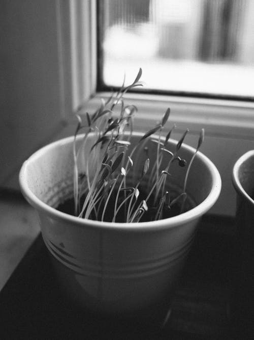 Potted plant placed on windowsill at home