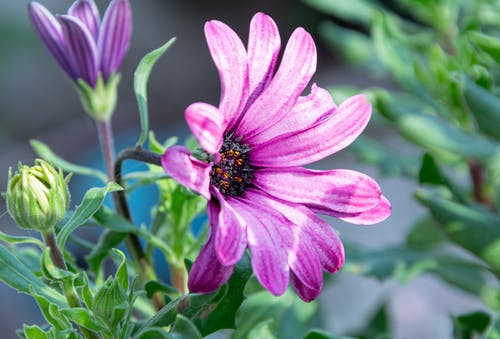 Free stock photo of beautiful flower, purple, tree in blossom