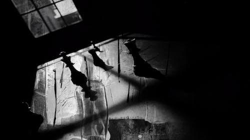 Kostenloses Stock Foto zu abstrakt, angst, das verbot, dunkel