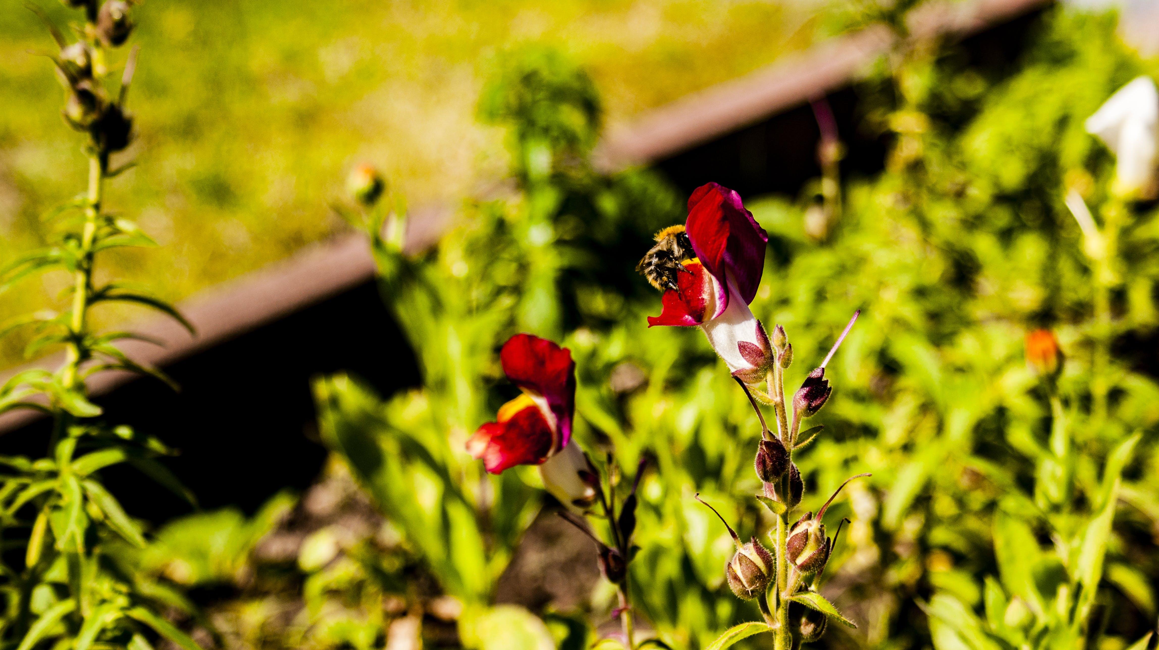 Δωρεάν στοκ φωτογραφιών με λουλούδι, μέλισσα