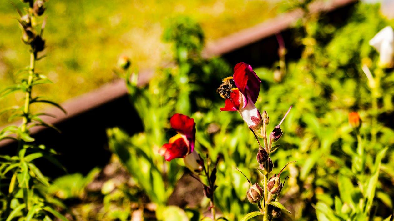 Бджола, квітка