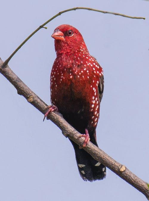 Red bird sitting on branch of tree